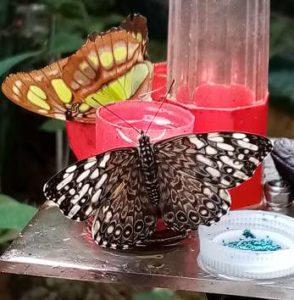 paradis du papillon à sanguinet